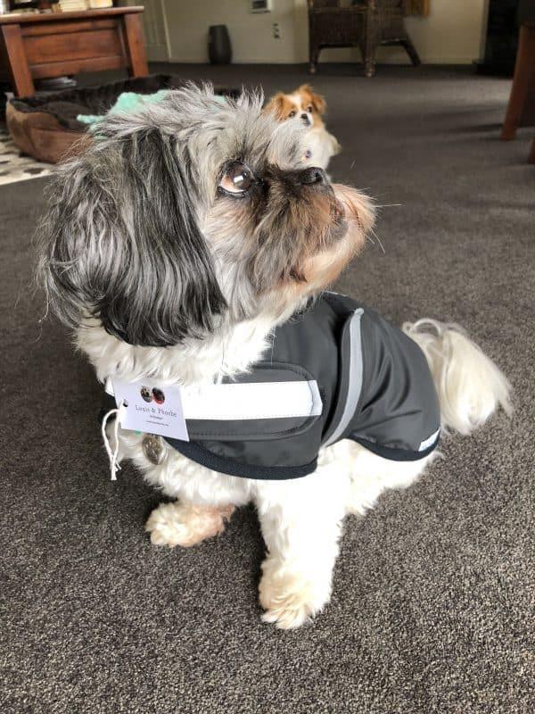 Waterproof, wool lined dog coat with easy velcro fasten