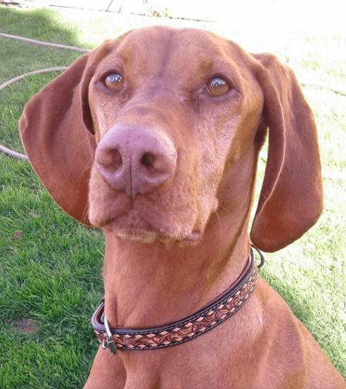 Angel Tucson leather dog collar