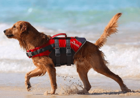 Hunter Moss life safety jacket for dogs