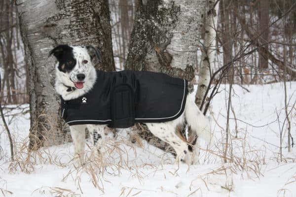 ShedrowK9 Tundra dog coat black with white piping and fleece lining.