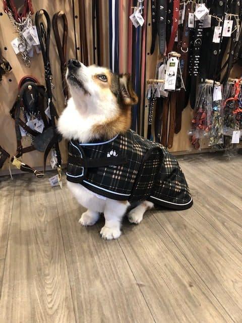 Shedrowk9 Glacier brown plaid dog coat