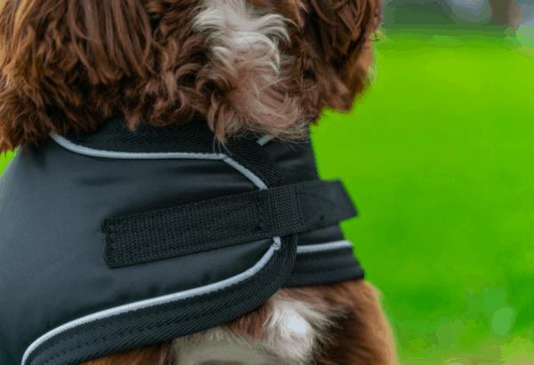Shedrowk9 Tundra black dog coat