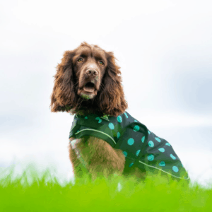Shedrowk9 dog coat black and teal polka dot