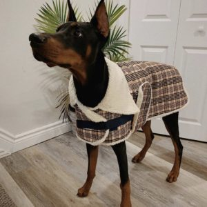 Shedrow K9 Aspen dog coat with sherpa lining.