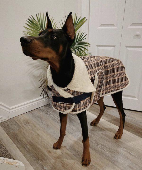 Shedrow K9 Aspen dog coat with sherpa lining.