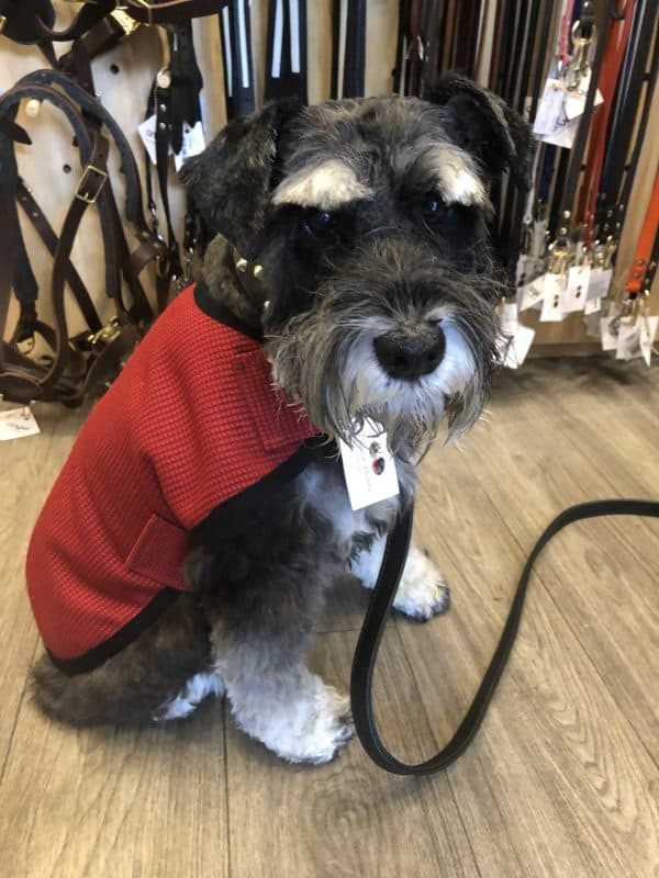 Mr soft Top dog coat pure wool red