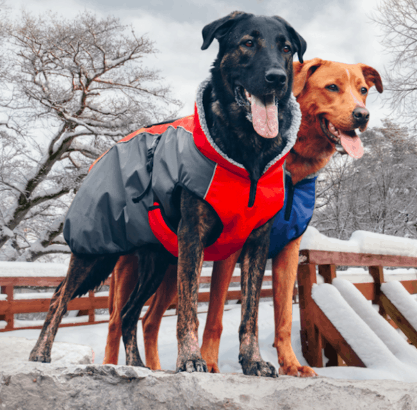 Shedrowk9 waterproof Chinook dog coat full coverage