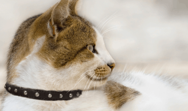 Angel leather studded cat collar, with bell and soft elastic for the safety of your cat.