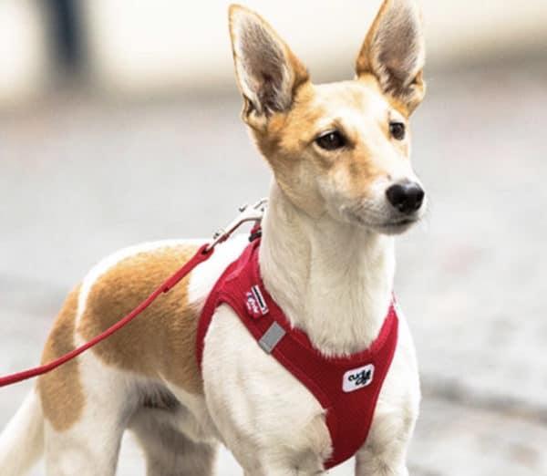 Curli comfort dog vest harness, Swiss design, cooling, Dog finder