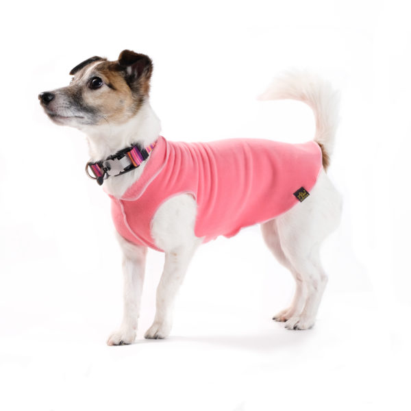 Goldpaw dog wear cosy and warm for winter