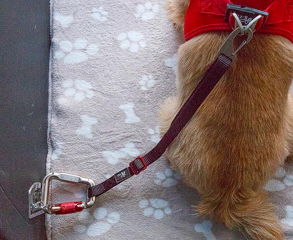 Curli dog safety belt