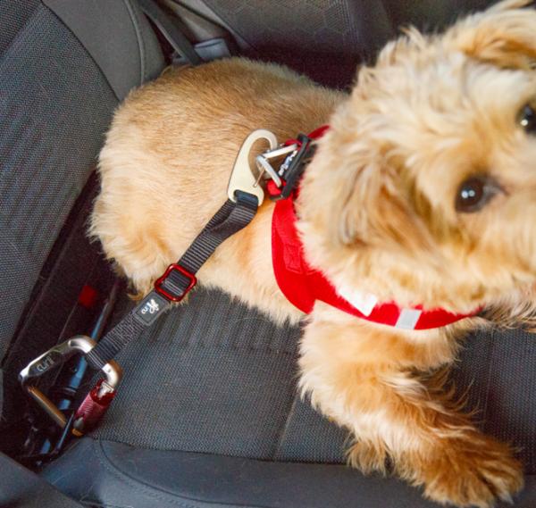 Curli car safety belt for dogs