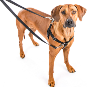 2 Hounds Freedom No Pull dog harness