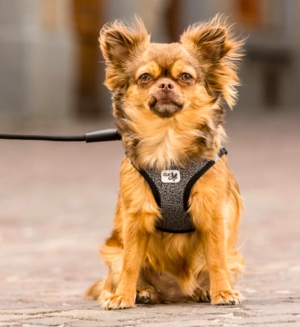 Curli Merino Step in comfort dog harness