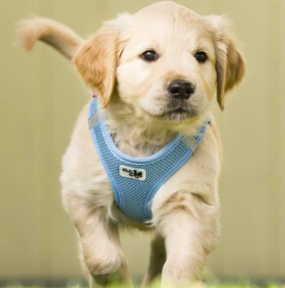 Curli Air Mesh Comfort Harness Skyblue