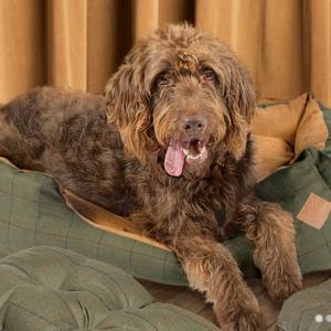 Danish Design Green Tweed snuggle dog bed made in the UK
