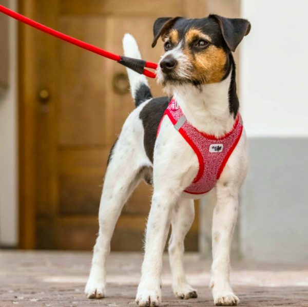 Curli Vest Harness Merino Red