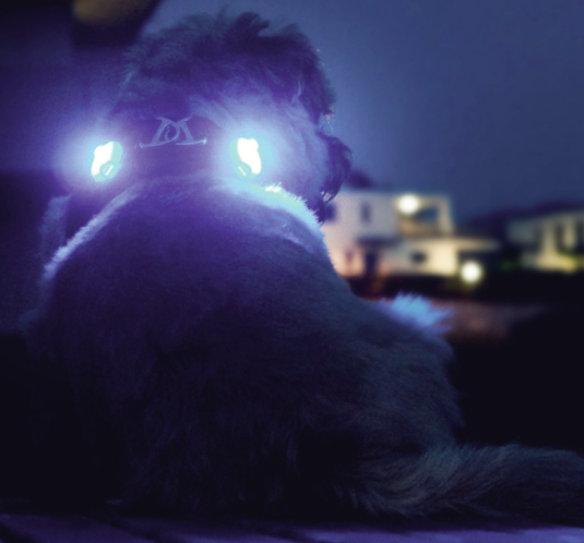 Curli Multifunctional Led Lights for the Curli vest harness