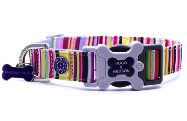 Hugo and Hudson dog collar stripe