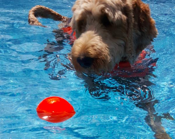 RuffDawg Indestructible dog ball