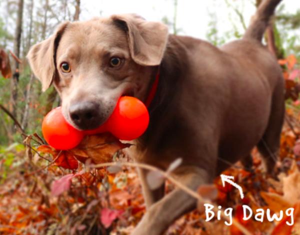RuffDawg Big Dawg Indestructible dog toy