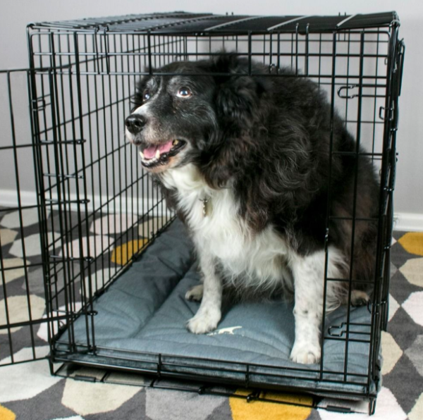 Tall tails Classic Crate Bed